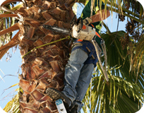 c and d schroeder tree services man climbing tree