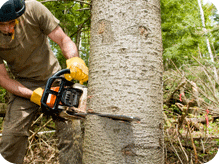 c and d schroeder tree services tree bark cutting