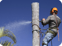c and d schroeder tree services tree stumping