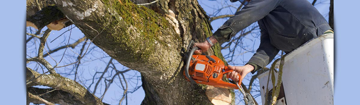 c and d schroeder tree services man branch cutting