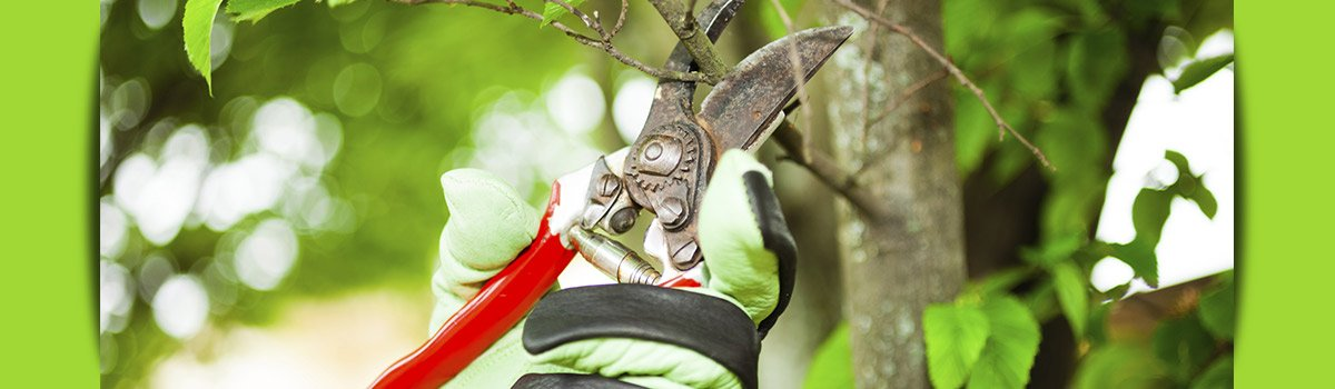 c and d schroeder tree services tree branch cutting
