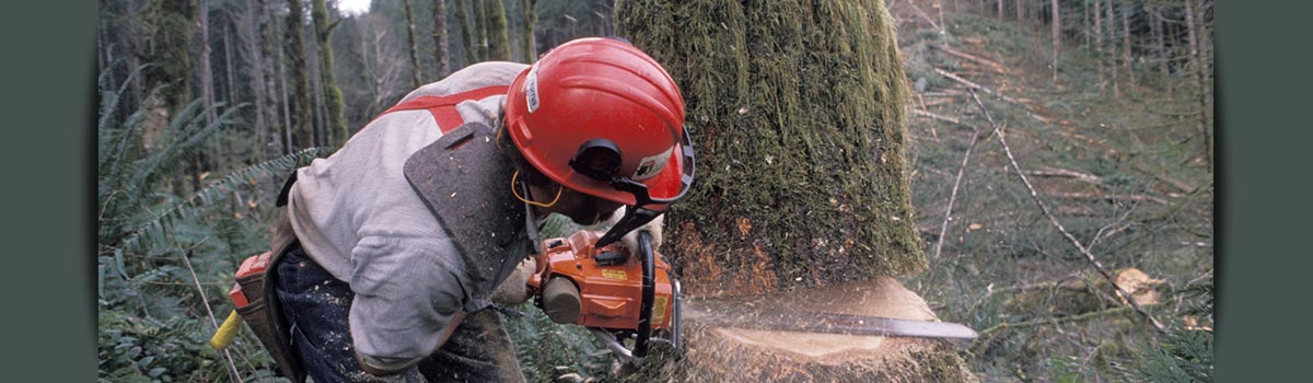 c and d schroeder tree services tree sawing