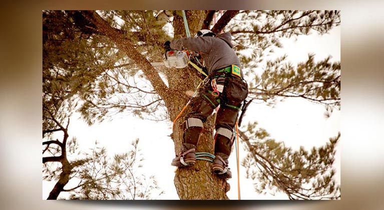 c and d schroeder tree services man sawing tree