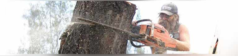 c and d schroeder tree services man sawing a tree