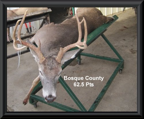 Jason Clift's big buck in the big buck contest 2015 in Clifton, TX