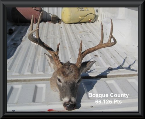 Byron Jenkin's big buck head at the big buck contest 2015 in Clifton, TX