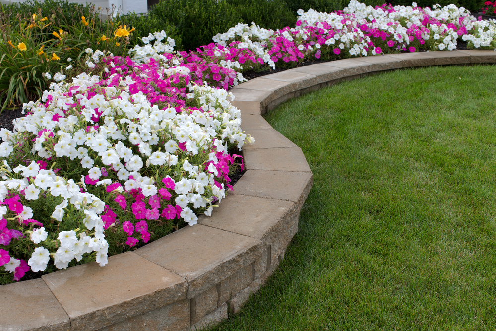 Commercial Planting & Flower Rotations