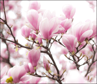 fiori eventi