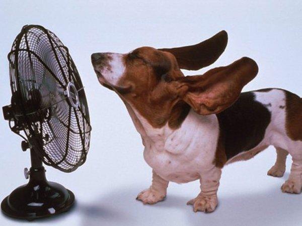 cane mentre prende aria da ventilatore