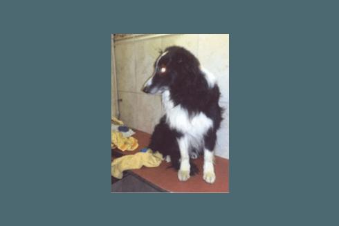 toelettatore cani di razza