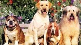 corsi toelettatore canino