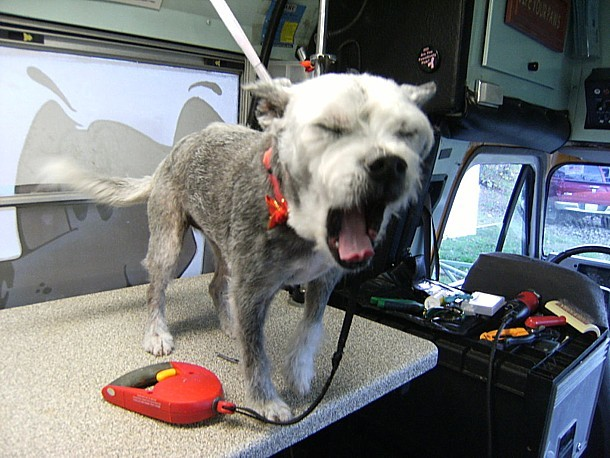 First-rate pet groomers and dog washing in Tryon, NC