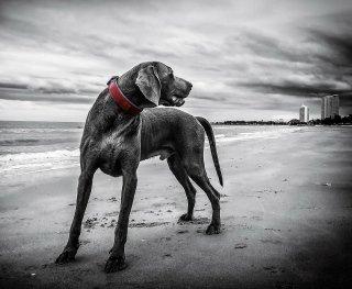 sospetto avvelenamento cane