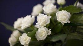 organizzazione funerali, funerali, lutti