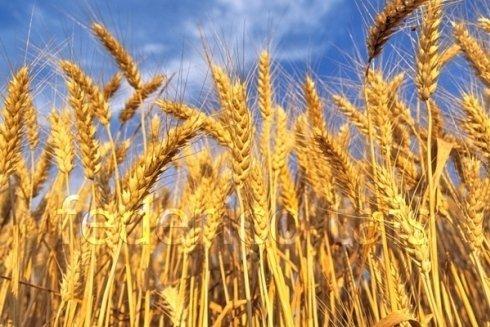 cereali naturali