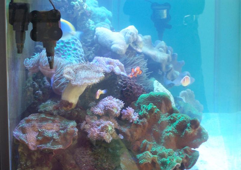 Aquarium designed as per customer recomendation
