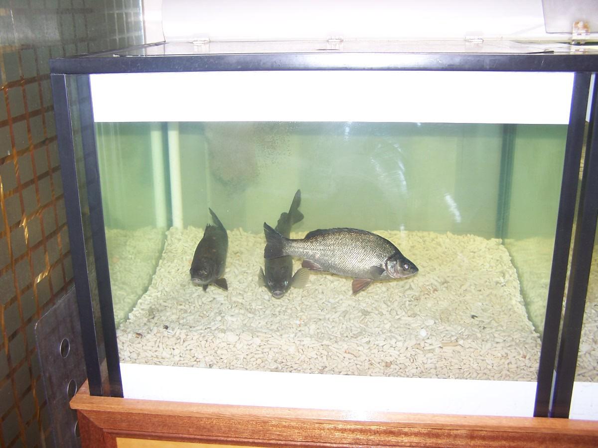 Well maintained aquarium
