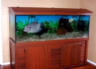 Maintenance of aquarium done by experts
