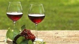 vendita vini rossi