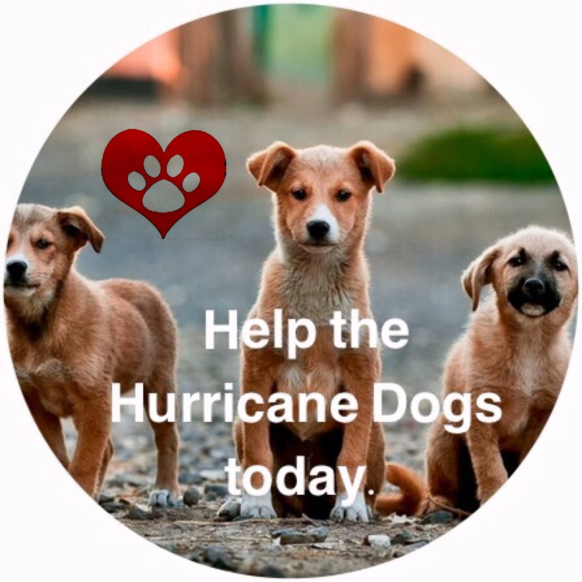 Help rescue dogs today