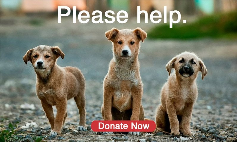 Please help. Donate now.