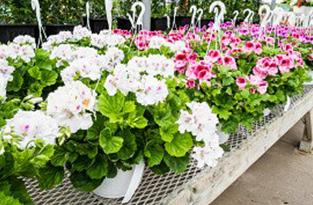 piante-ornamentali
