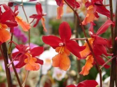 Servizi Orchidea
