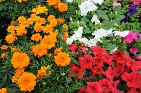 Piante fiorite da esterno