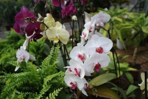 Orchidee per interno