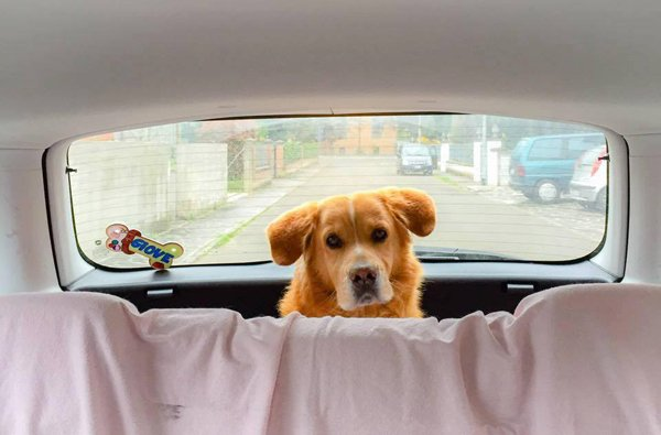 Cane nel bagagliaio di una macchina