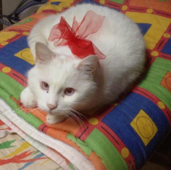 gatto bianco sul letto