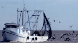 pesca diretta