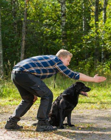 Dog training in progress in Sydney