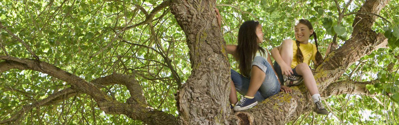 two girls in a tree trimmed by a tree service in Jordan, MN