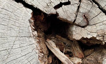 Dry rot experts
