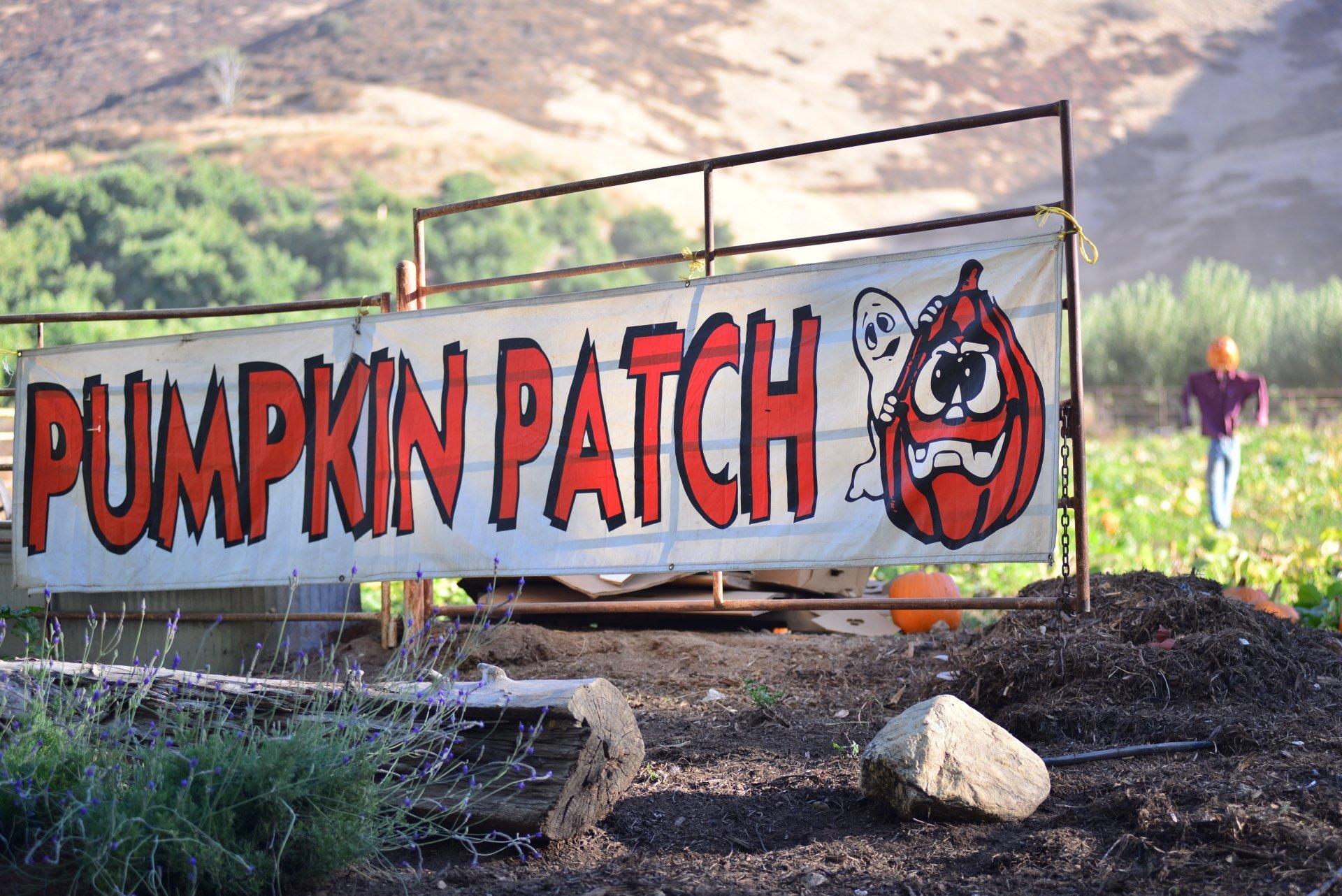 Pumpkin Patch at Greenspot Farms In Mentone CA Halloween 2018