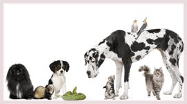 centro cura animali