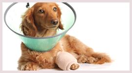 operazioni chirurgiche animali