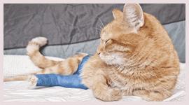 cure veterinarie gatti