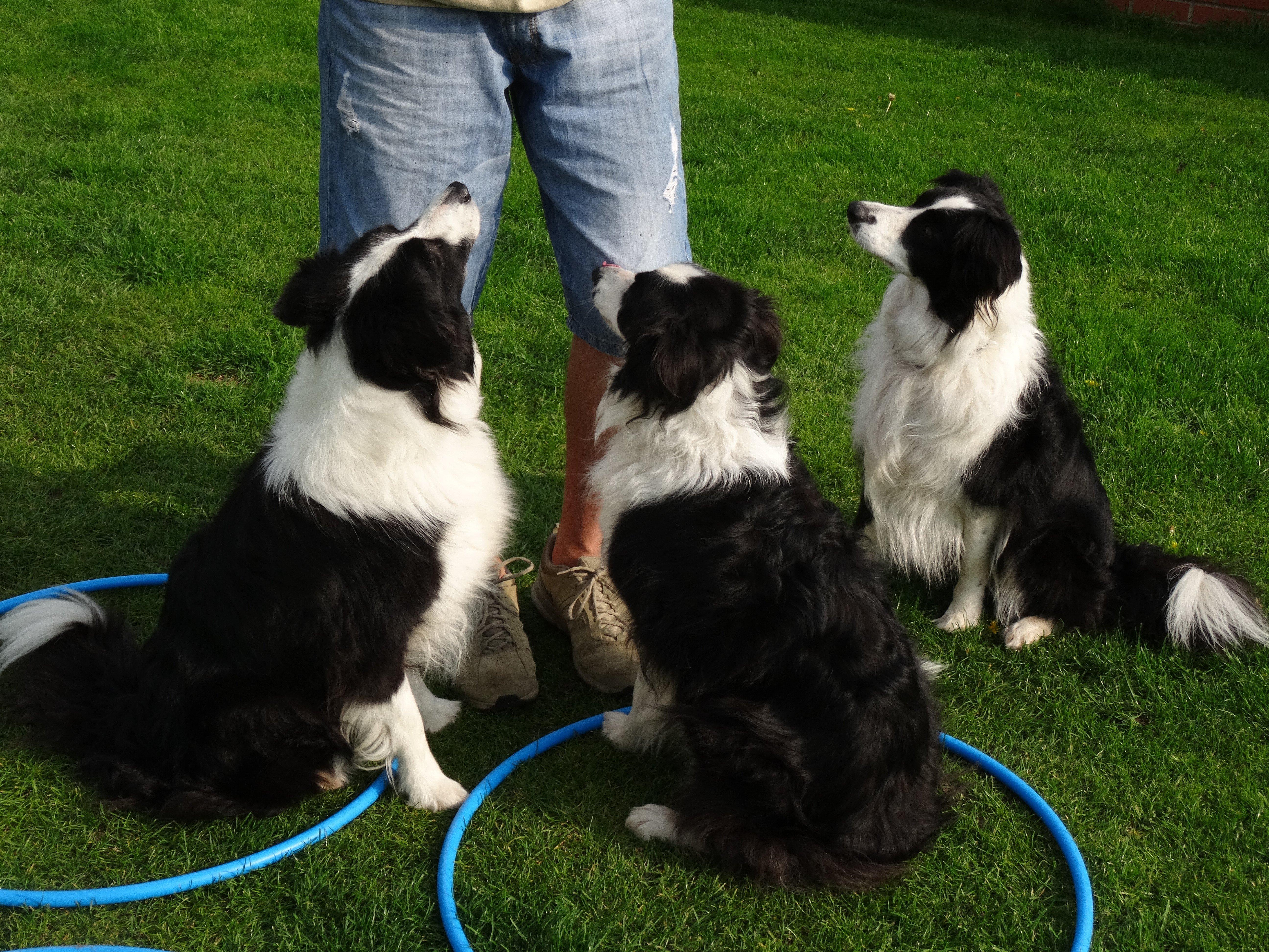 Dog Kennels Wortham