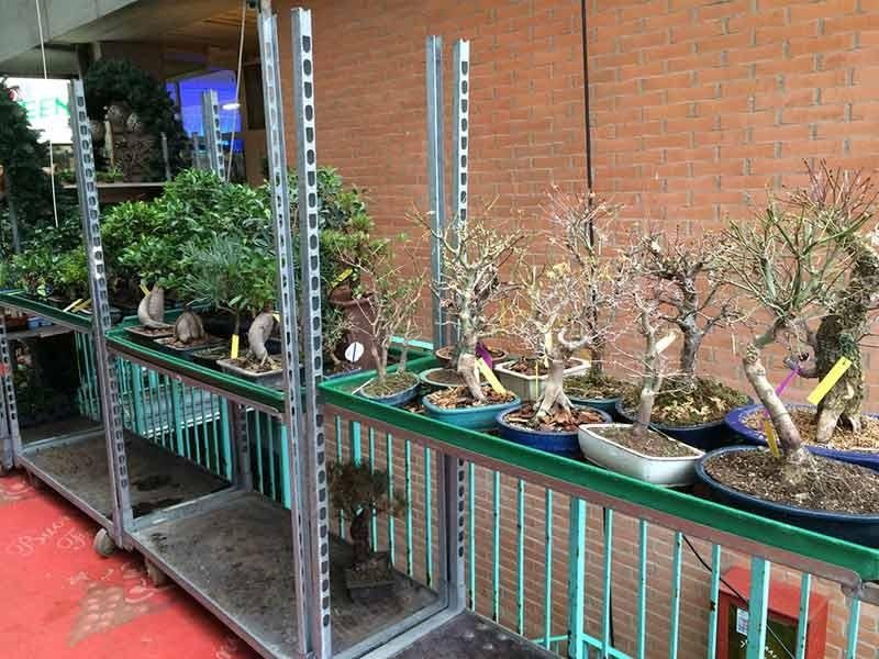 servizio bonsai