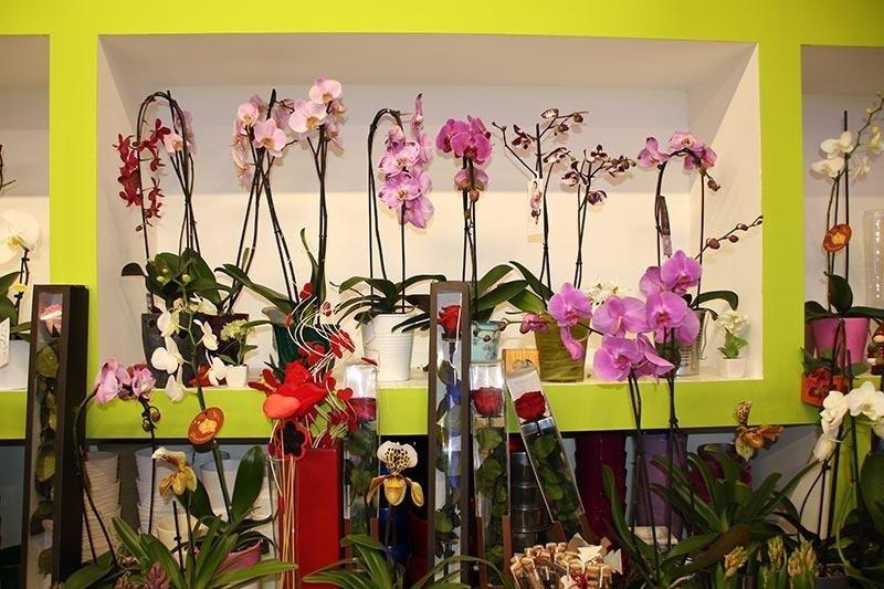 esposizione orchidee