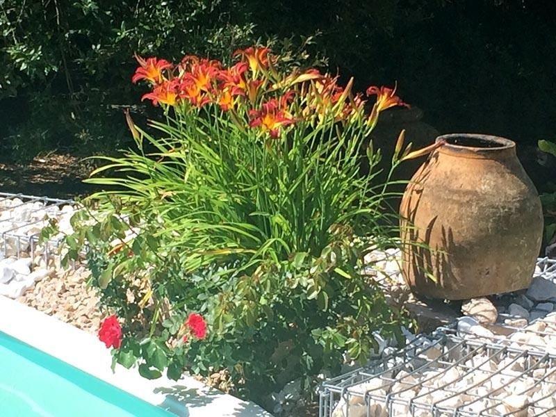 fiori per giardini