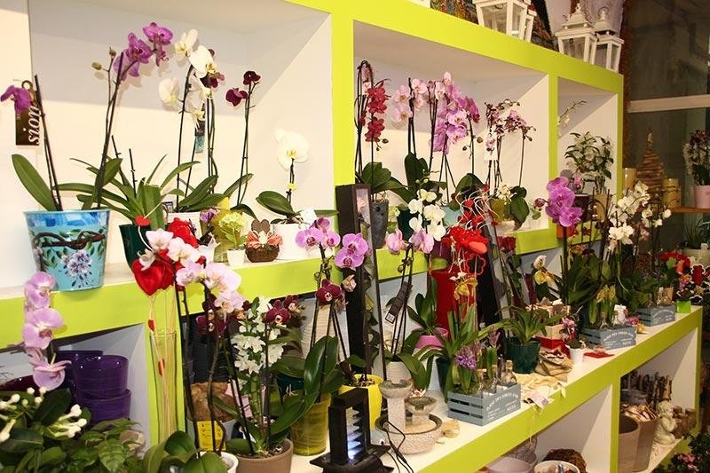 espositore orchidee