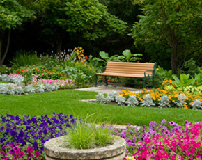 Beautiful flowers and gardening