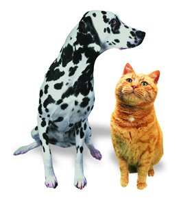 cat boarding - Edinburgh - Ingliston Cattery and Kennels - Dog and Cat 1