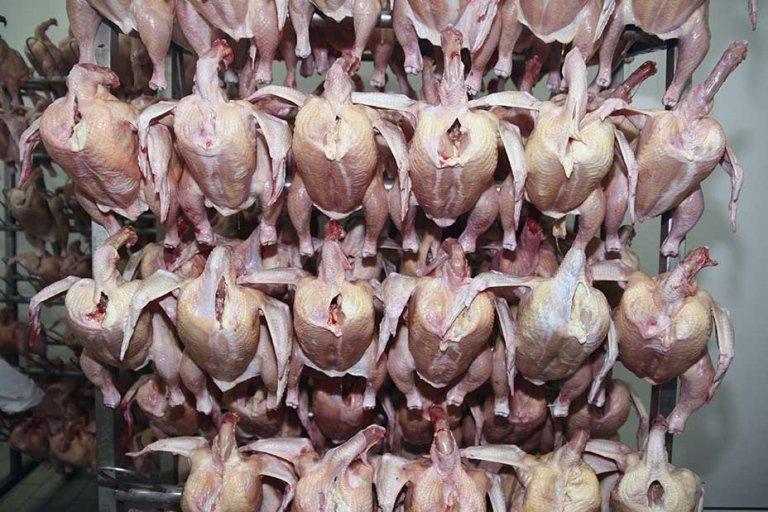 macellazione carni avicole