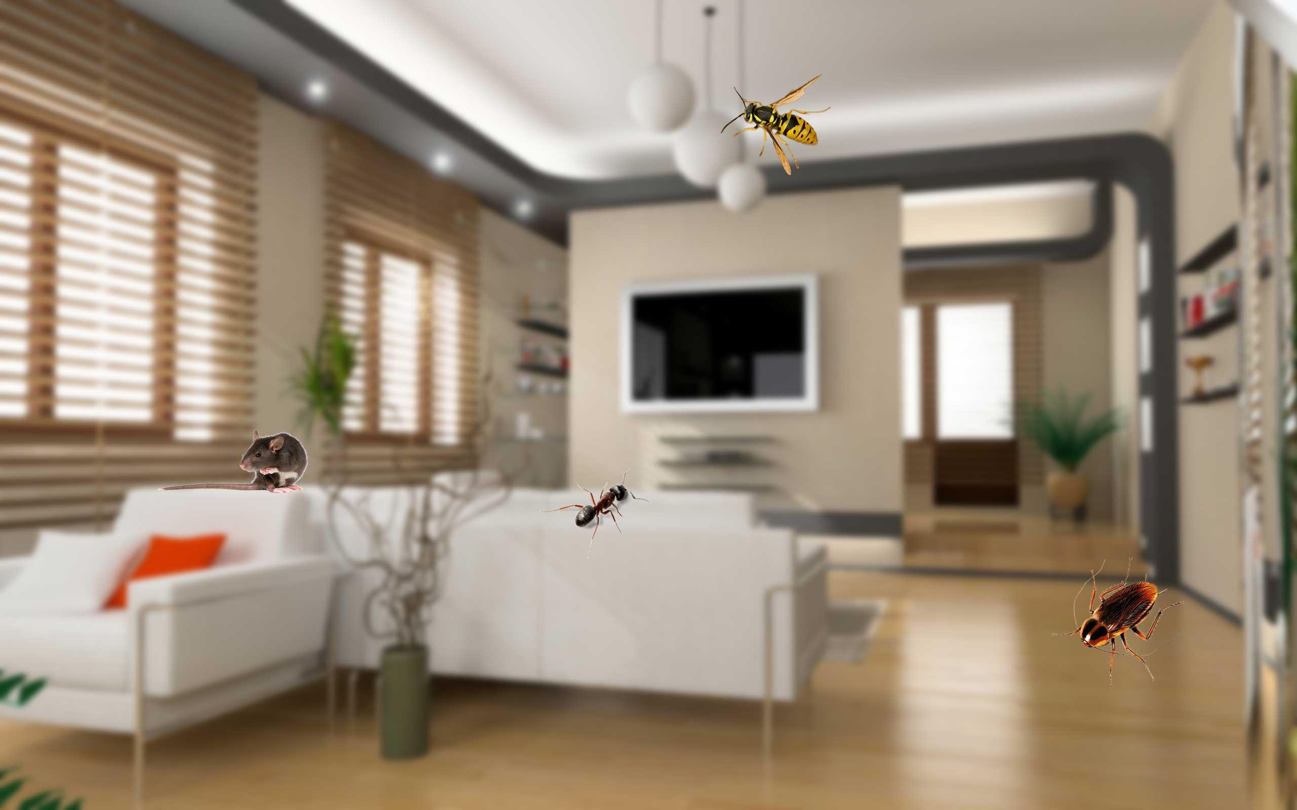 living area pest control