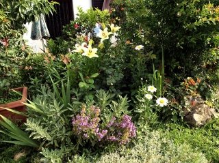 fornitura fiori