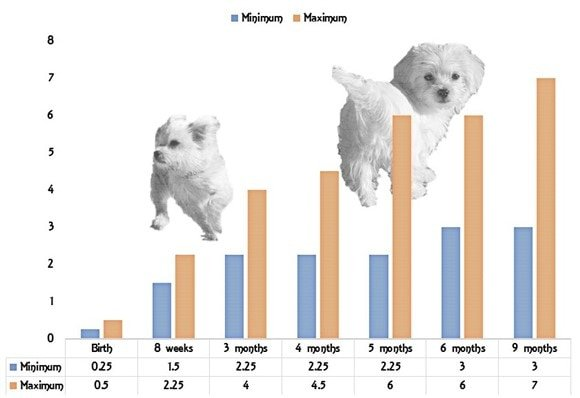growth puppies The Cutest Puppies – Puppy Growth Chart Template